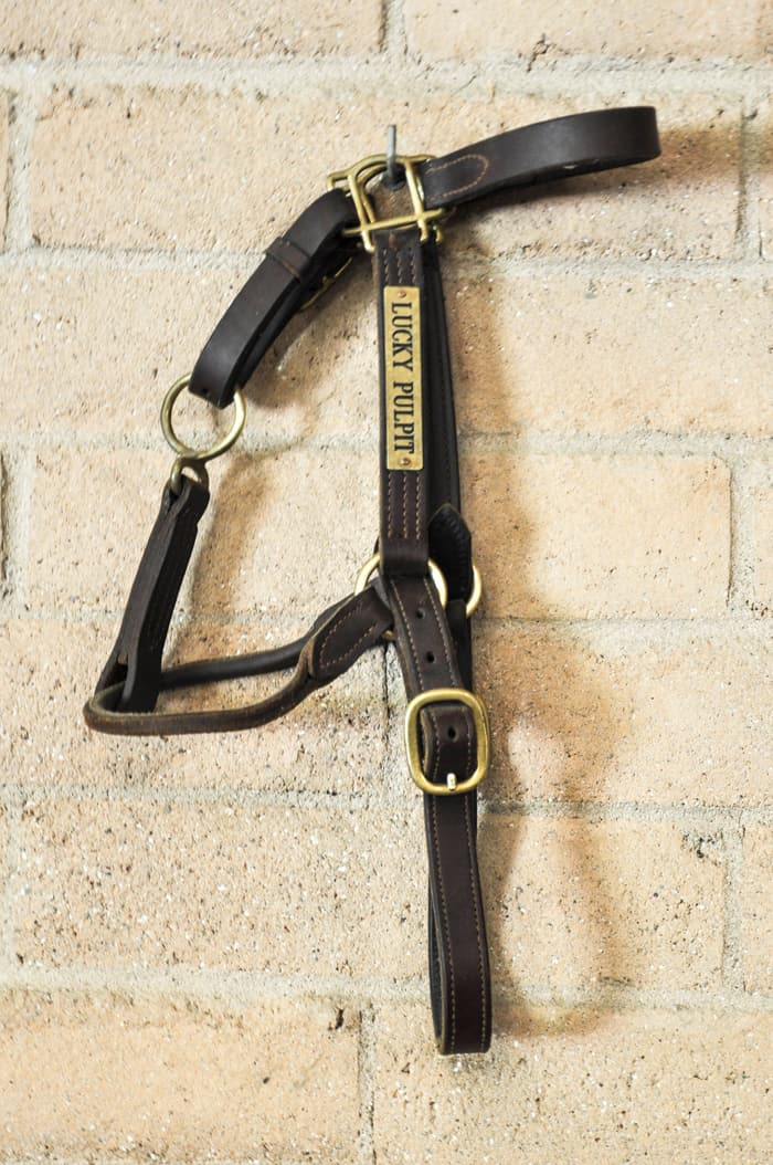 Lucky Pulpit's harness hangs in the Stud Barn
