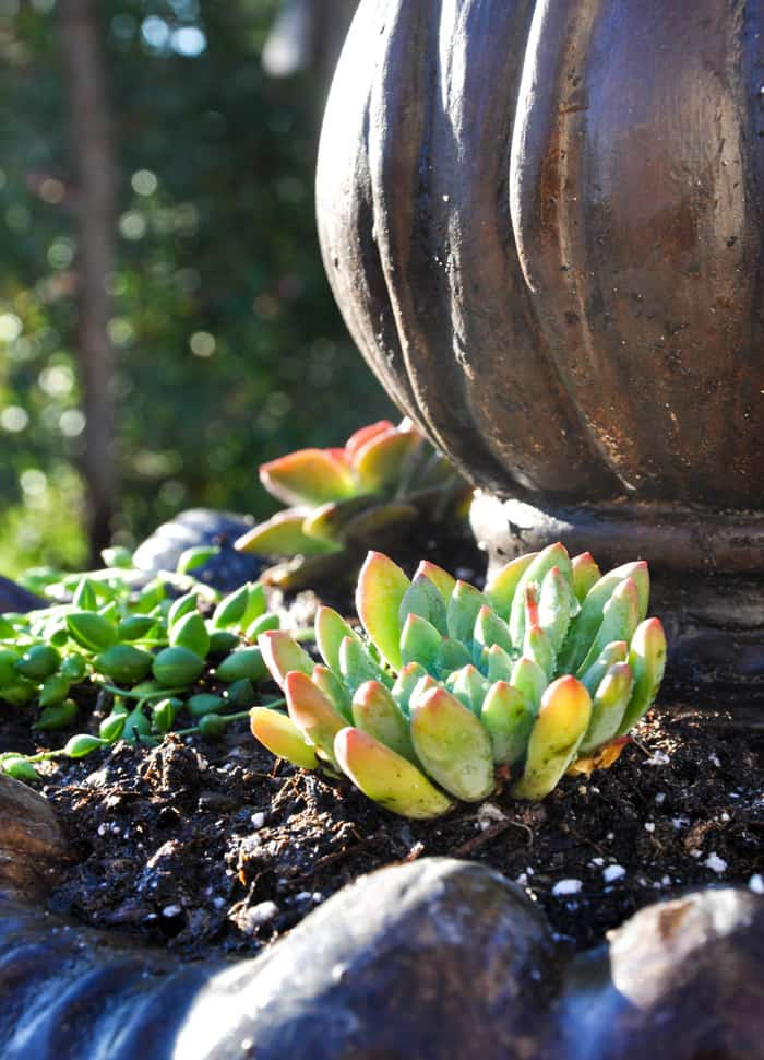 How to Make a Succulent Fountain