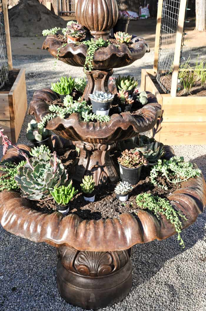 How to create a Succulent Fountain. Beautiful presentation with cascading succulents The Perfect solution for an old fountain too!