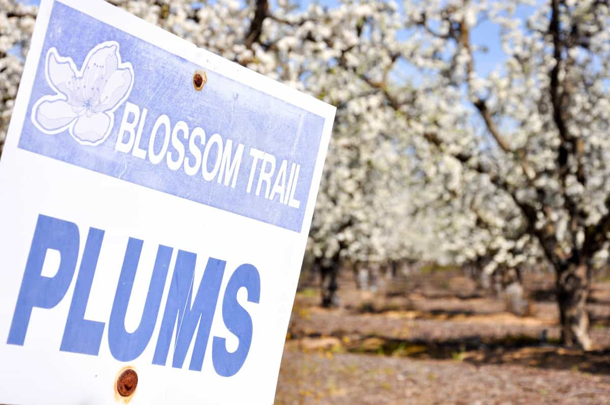California Fresno County Blossom Trail
