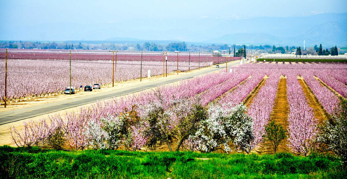 California Fresno County Blossom Trail