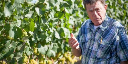 Meet a Farmer: Bill Pease of Materra|Cunat Family Vineyards