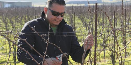 Meet a Farmer: Everardo Robledo of Robledo Family Winery