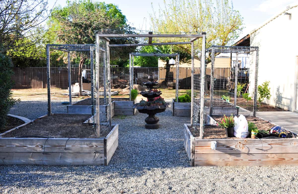 My Garden Looked Pretty Bare After Pulling All The Vigorous Growth From The  Fall Garden. Iu0027d Worked So Hard Amending The Soil Before The Fall Planting  That ...