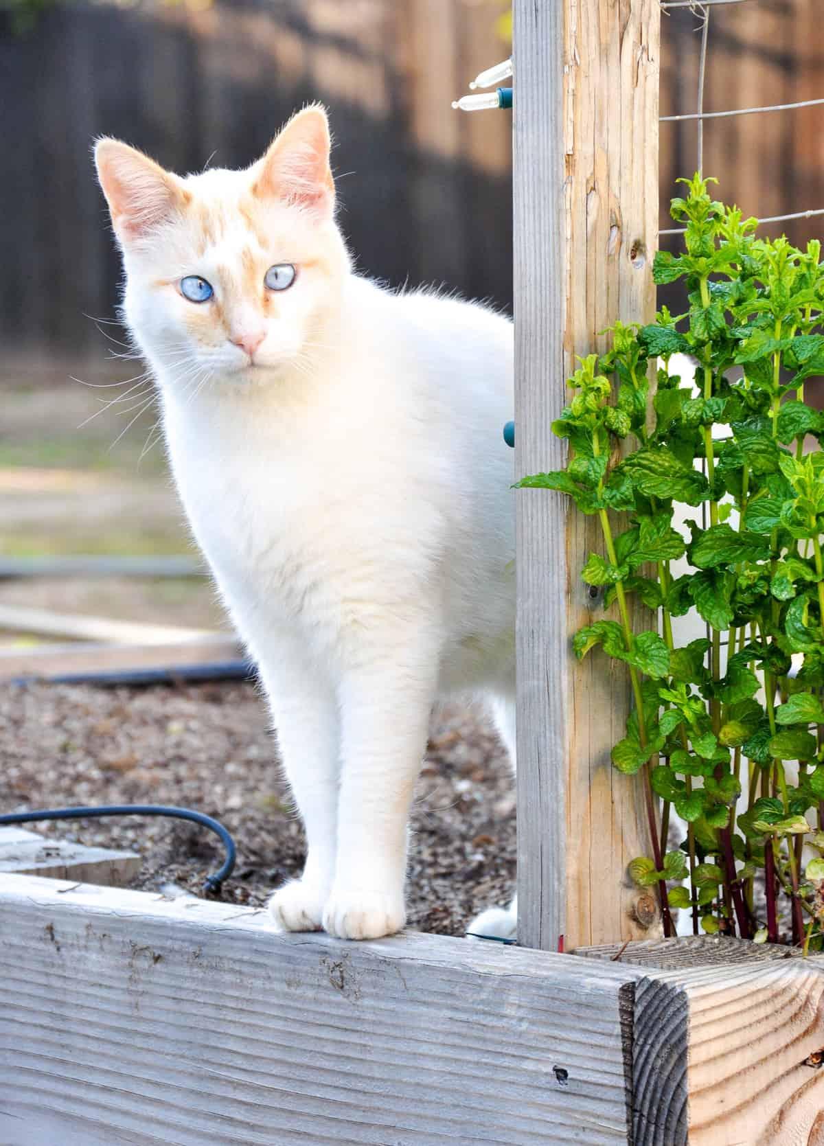 Planting Your California Spring Garden