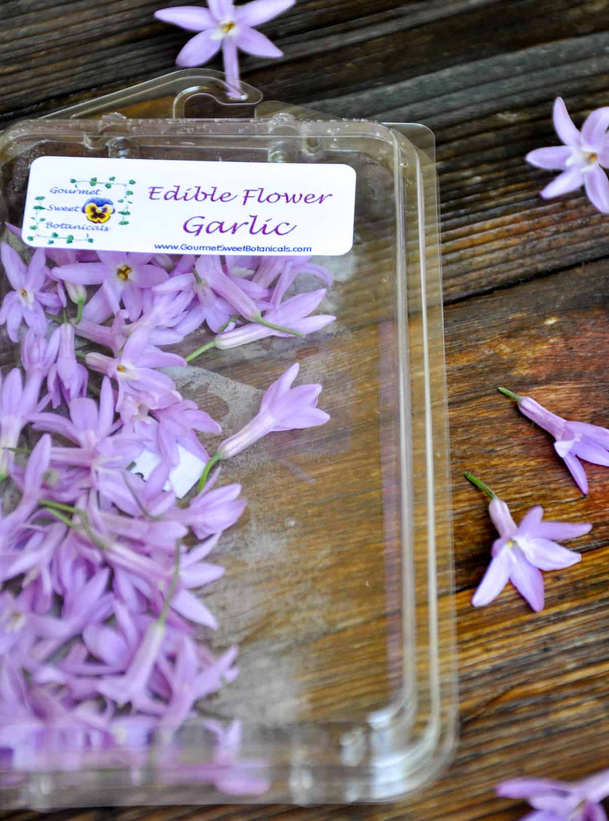 edible flower garlic