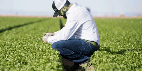 Meet a Farmer: Josh Roberts of Taylor Farms