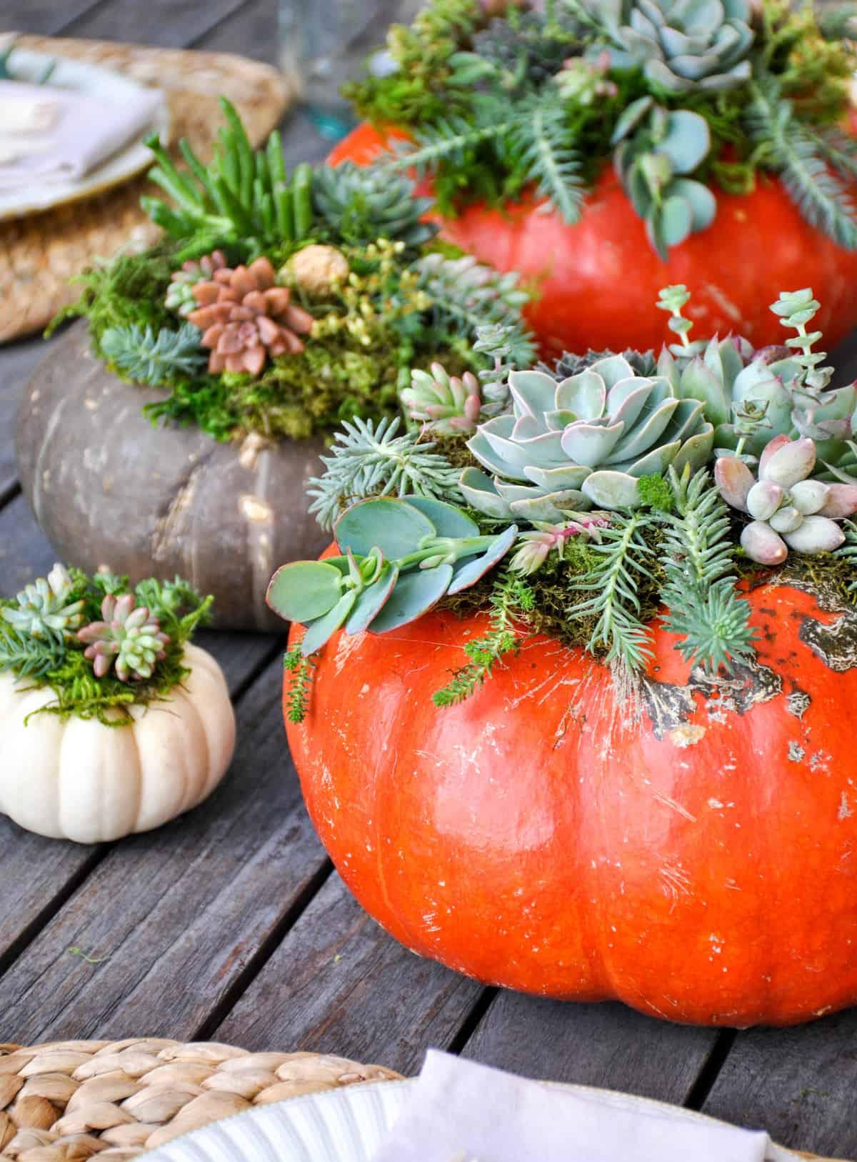Succulent Pumpkin Centerpiece Tutorial