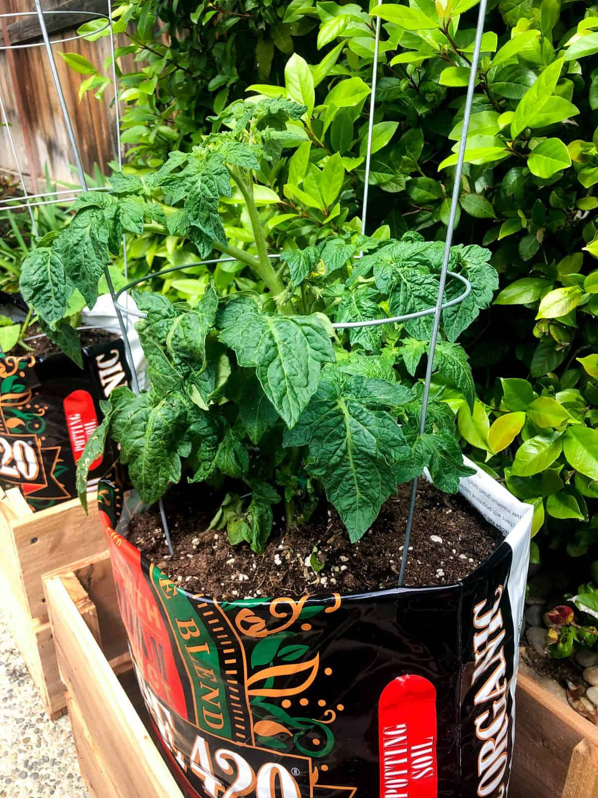 Soil Bag Container Gardening