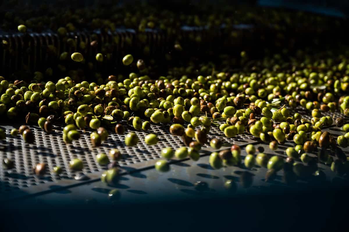 How olive oil is made - Photo sorting