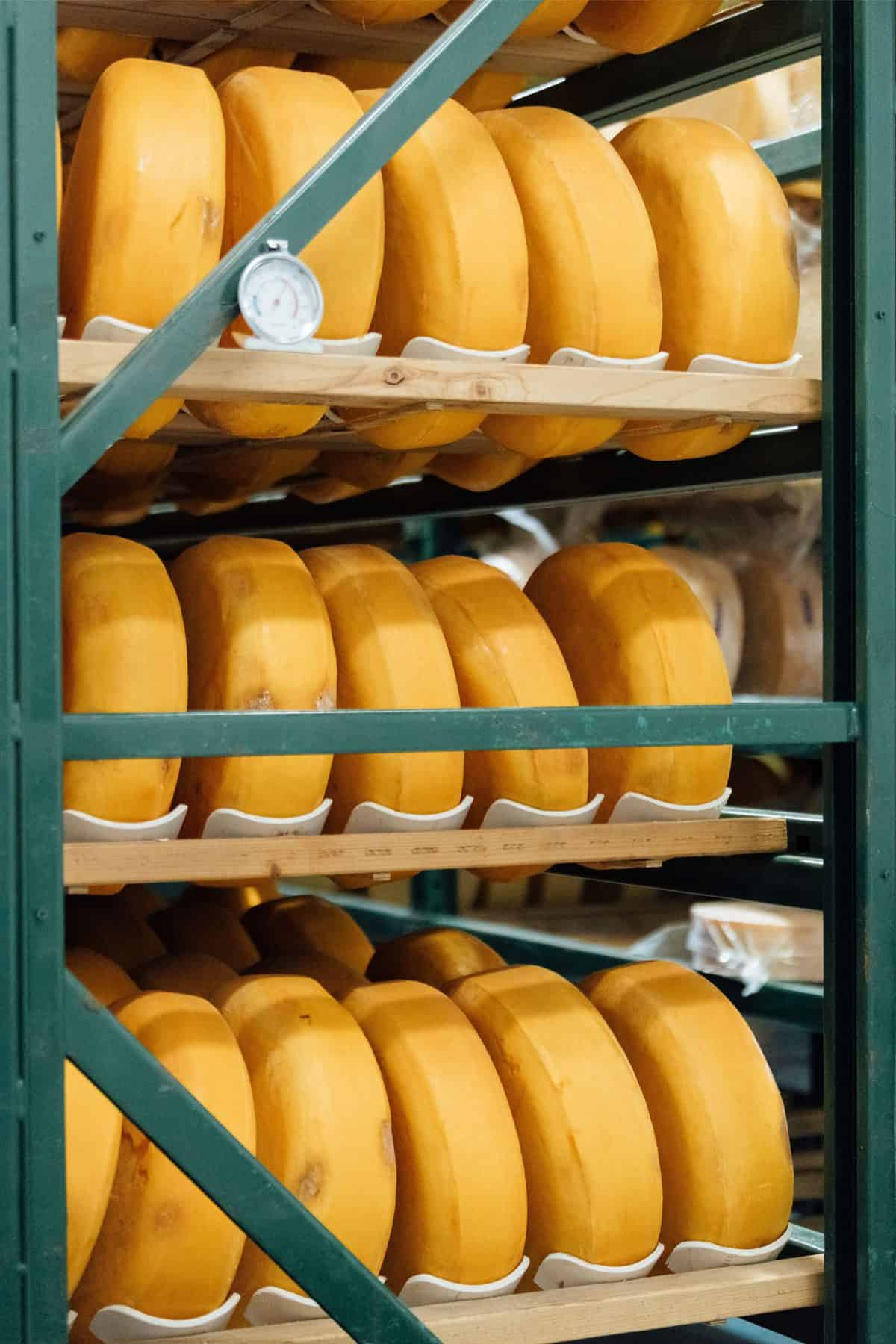 Cheese in aging room