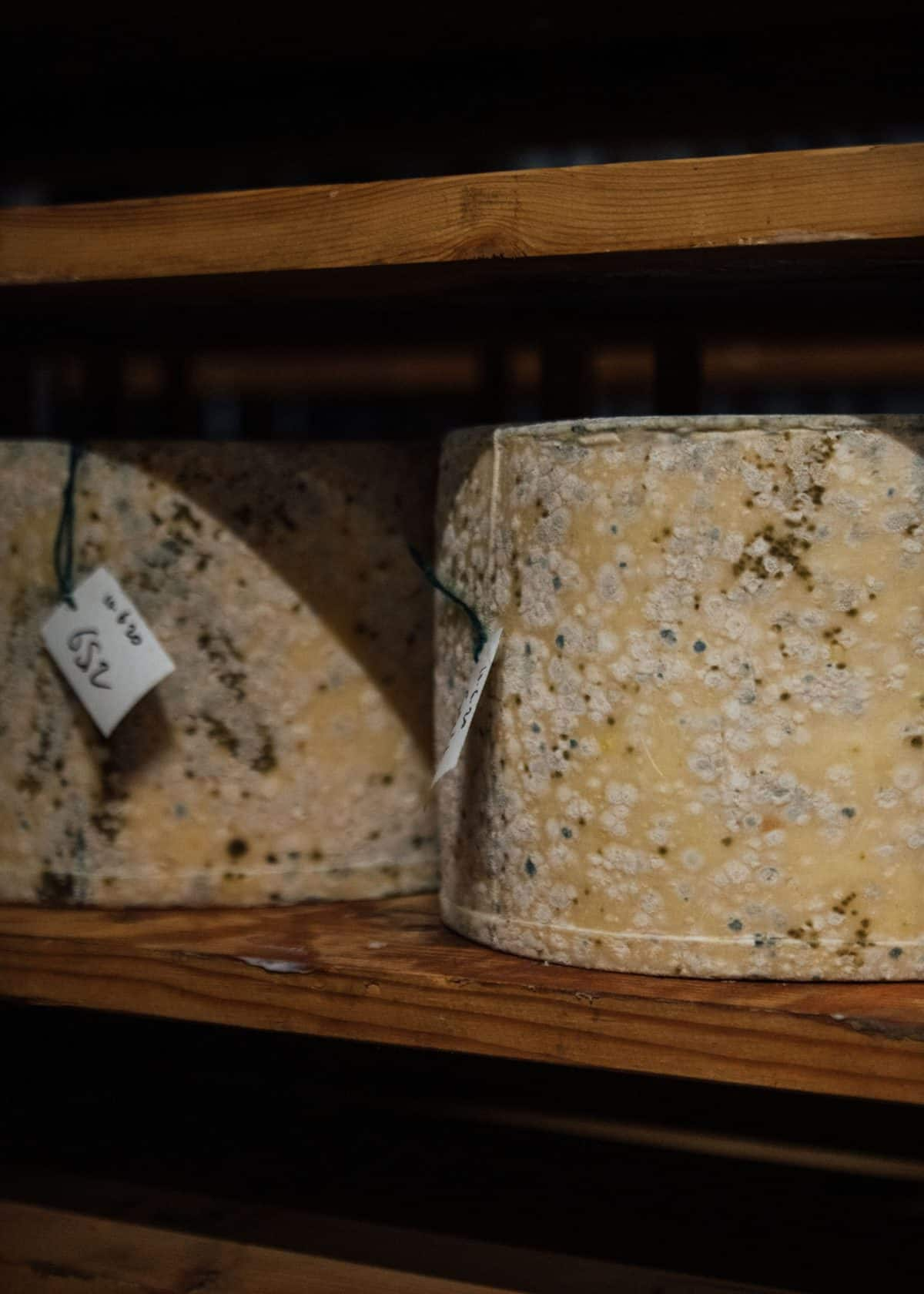 Cheese growing mold