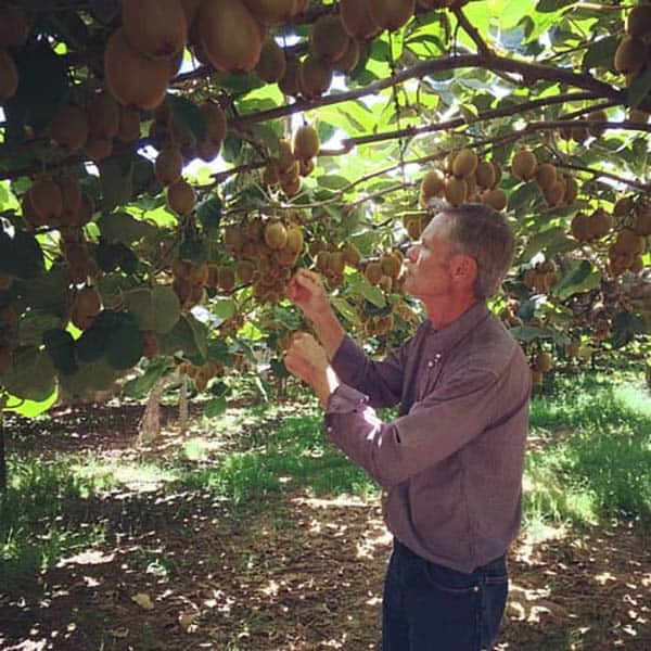 A farmer standing underneath kiwi vines