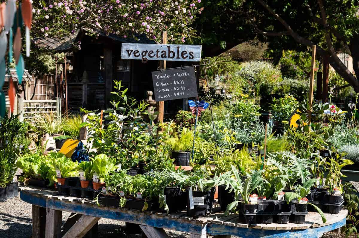 Cambria Nursery and Florist